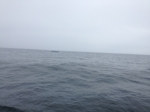 One of my terrible whale photos