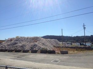 Oyster shell pile at the oyster farm