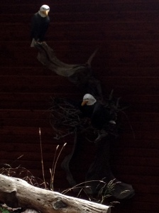 Closest I've come to bald eagles are these models on someone's porch