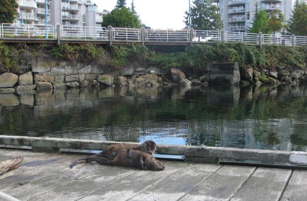 Nanaimo, Vancouver Island,BC