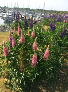 We visited Point Roberts, WA- a lovely town and seaside community - spring flowers in bloom