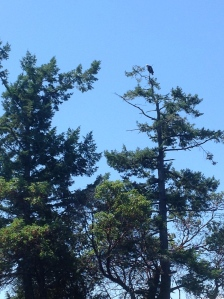 Spotted an eagle at Princess Harbour