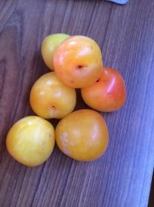 Pender Island plums