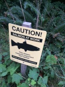 Salmon at work