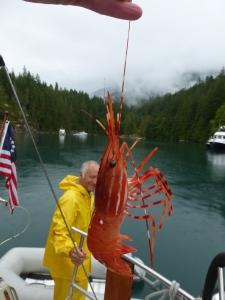 Catching prawns!