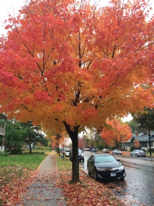 Beautiful fall colors